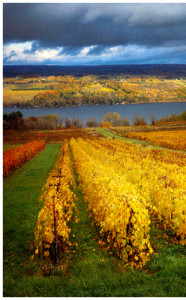 photos-right-wineries